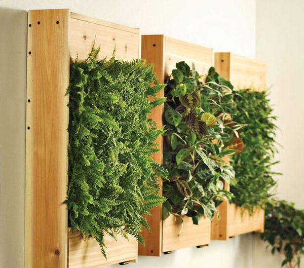 Living wall garden using wooden boards