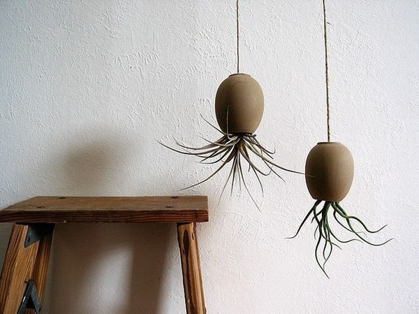 Michael McDowell's air plant pods