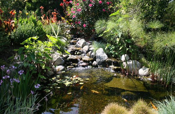 Natural look of the koi pond adds to the beauty of the landscape