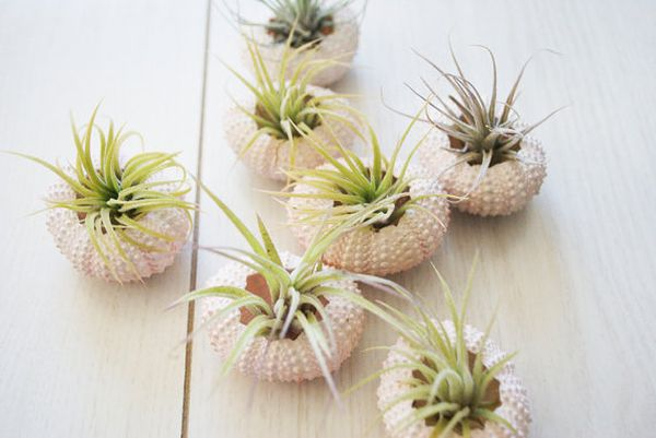 Pink Sea Urchin Planters on the Wall