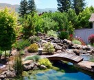 koi ponds how to