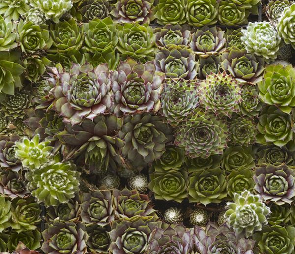 A closer look at the succulent living wall design