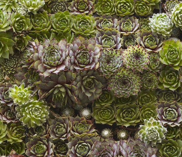 A closer look at the succulent living wall design
