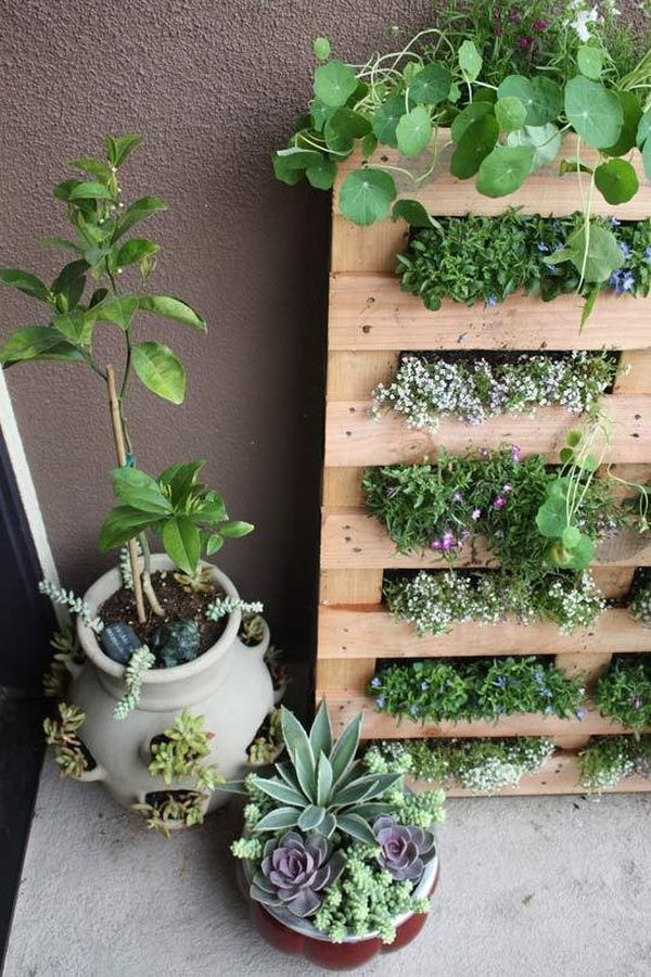 A mini-herb garden in the living wall style looks great in the kitchen