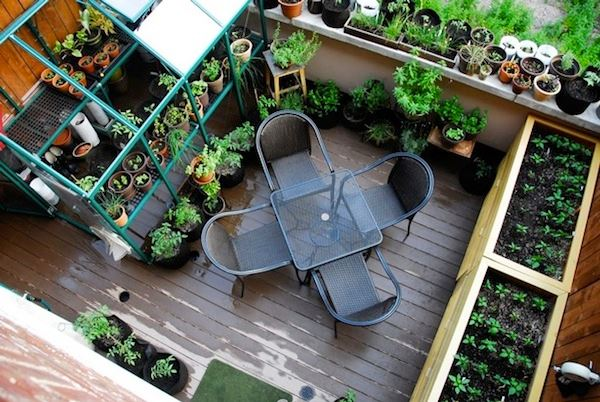 Balcony garden with potted plants