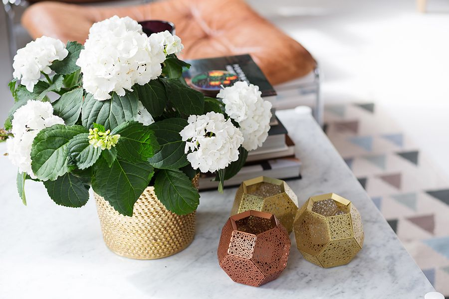 Brass flower pot adds a metallic tinge to the apartment