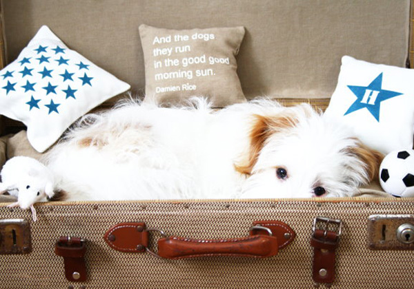 Brown and white repurposed suitcase dog bed