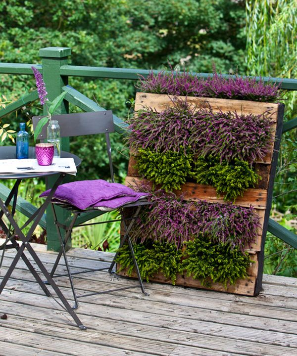 Colorful wall planter all set to grace your home's interior