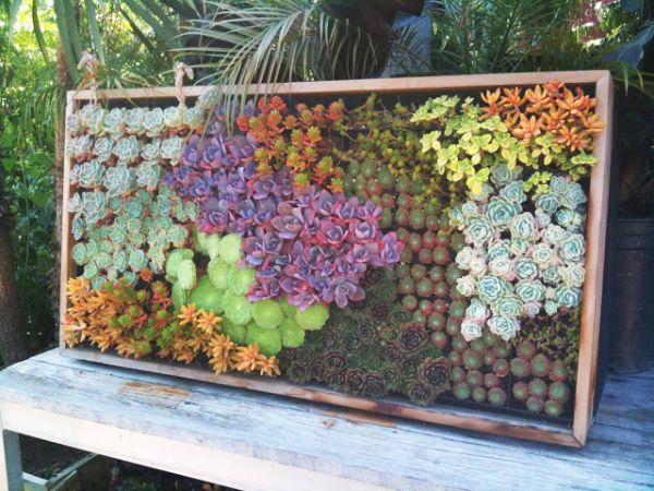 Combine different colors of succulents to get a more vibrant look