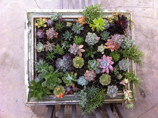 DIY living wall idea from a vintage frame