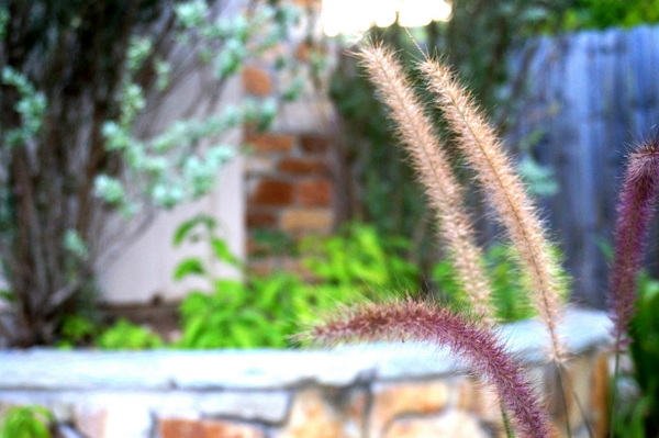 Fountain grass is a low-maintenance option