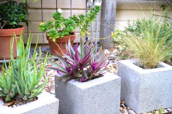 Healthy plants in pots and cinder blocks