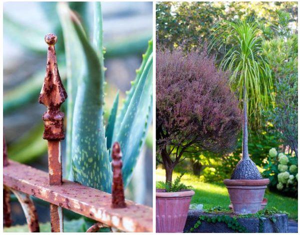 Many hidden wonders of the featured green garden