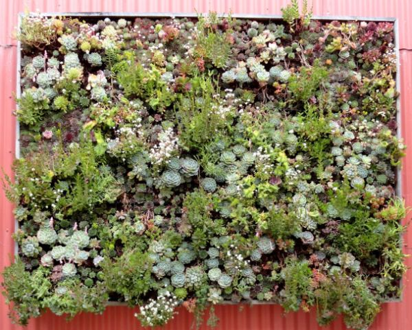 Vertical living wall panels from Flora Grubb
