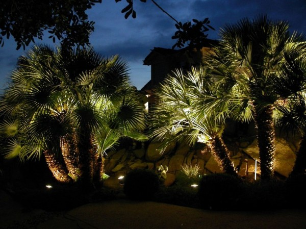 clearwater outdoor lighting provides the accents for these palms you