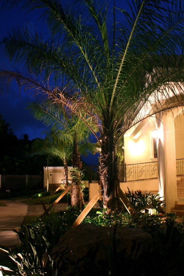 beautiful palm trees in garden at night