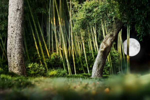 bamboo garden lighting with moon