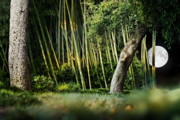 bamboo garden lighting with moon