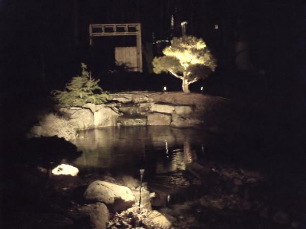stark white lightingon plants and treed at a garden pond