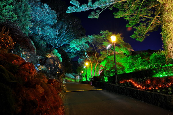 colorful lighting at Wellington Botanical Night Street in Gardens Roads New Zealand