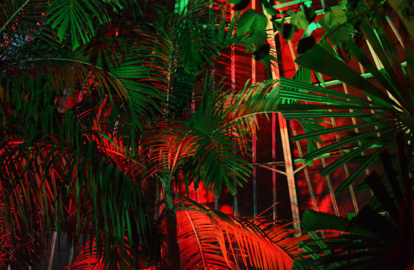 red lighting in botanical gardens gives a dramatic contrast