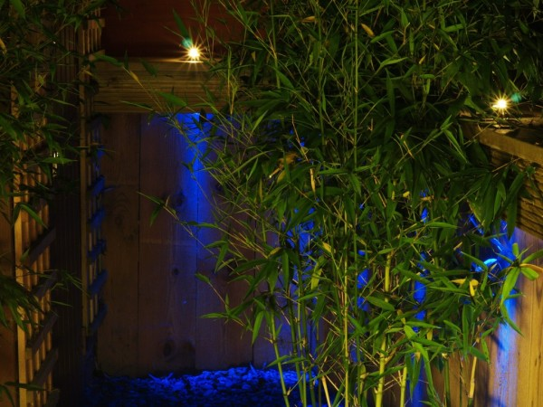 use of blue lighting in garden setting
