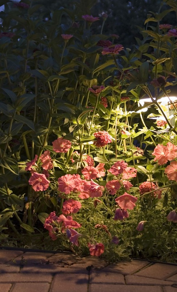 amazing garden lighting flower. View In Gallery Lighting Garden Flowers From Behind Amazing Flower F