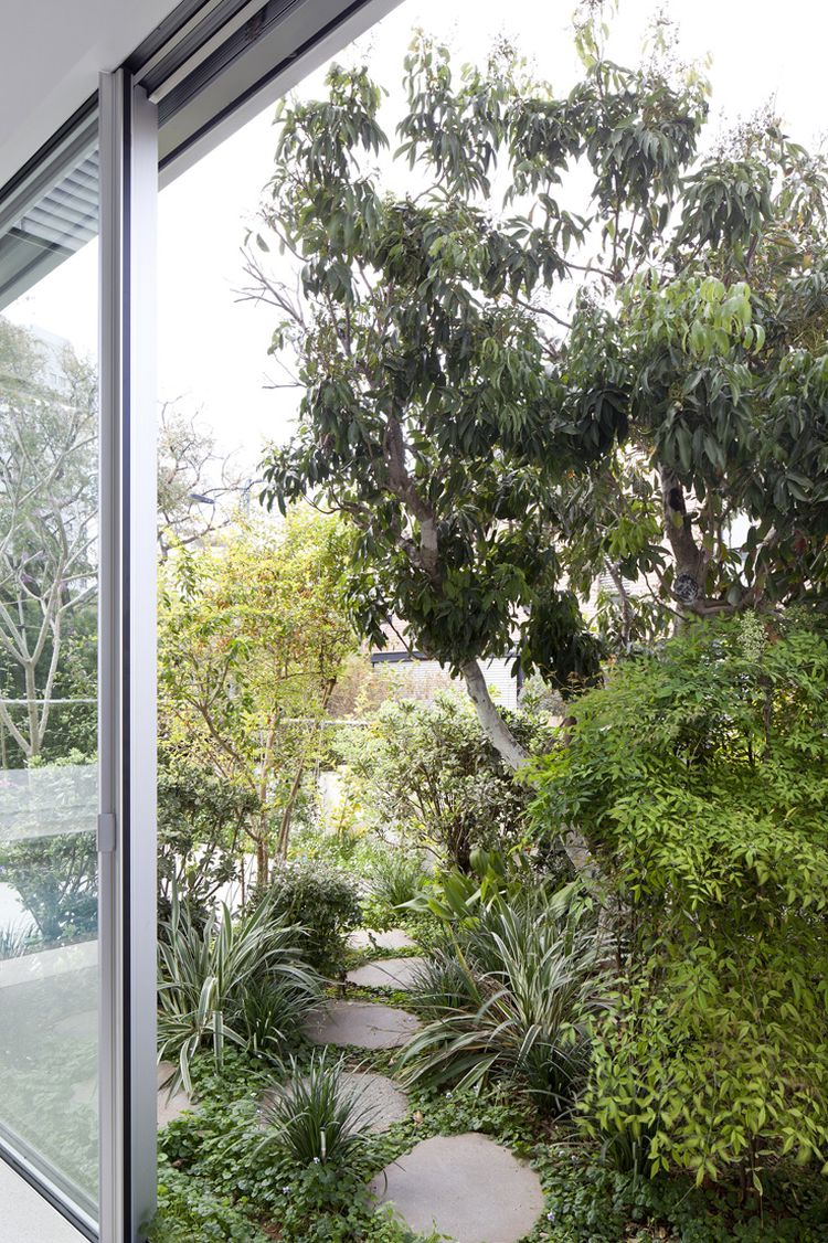 Lush green garden outdoors