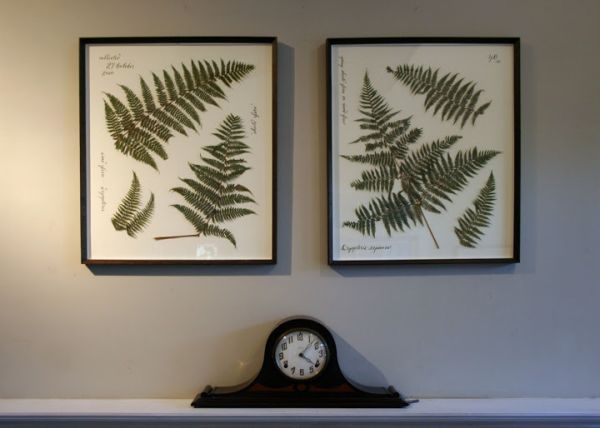 Pressed and framed ferns wall art