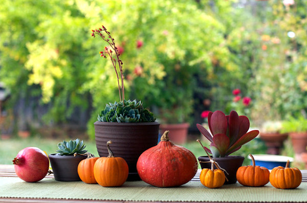Succulents and fall produce