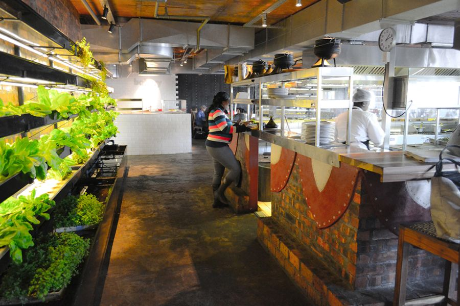 Sustainable aquaponic farming at the Moyo Restaurant