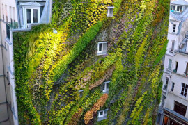 Revealing A Stunning Living Wall: Patrick Blanc's Work for Paris Design Week