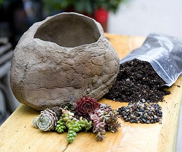 Garden stone succulent kit