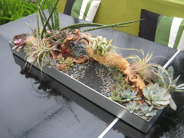 Gravel, succulents and air plants