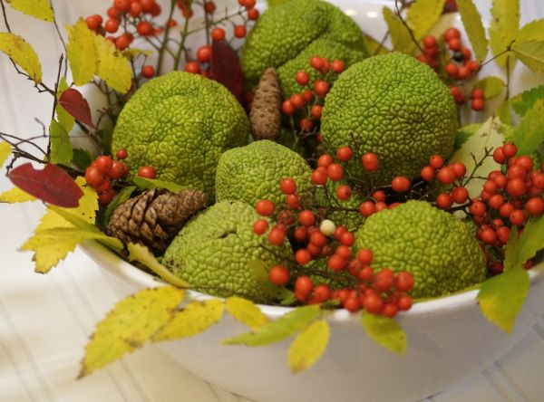 Just grab some hedge apples and berries