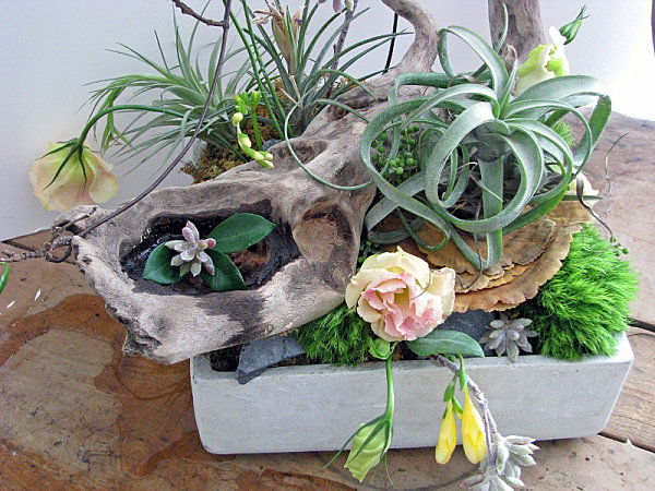 Creative succulent planter ideas for Plant de pot exterieur
