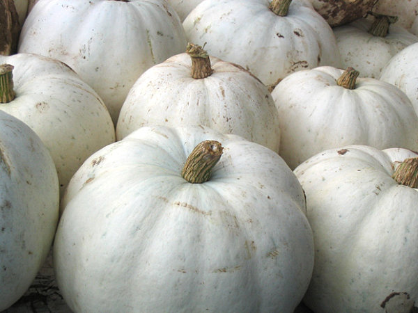 White pumpkins for a shabby chic look