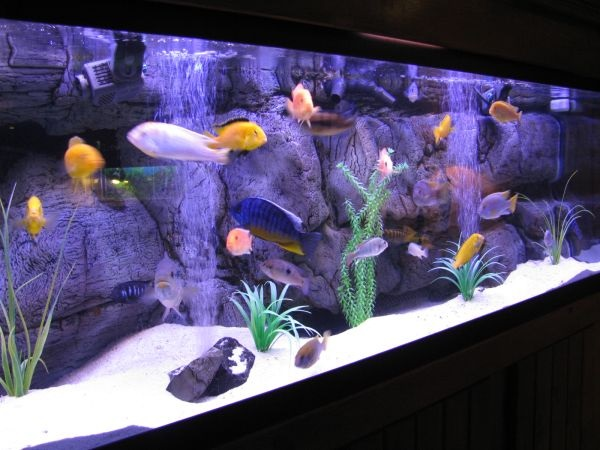 Modern aquarium with colorful fish