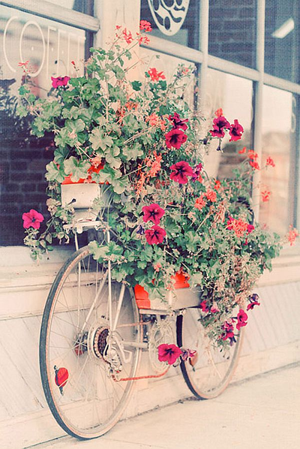 flower pots upcycled bicycle