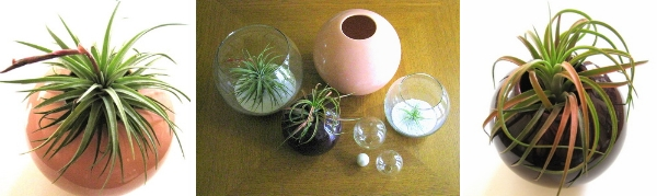 An air plant design vignette