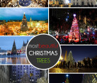 most beautiful christmas trees - outdoor