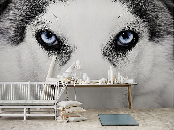 Bold wolf wallpaper in grey and white