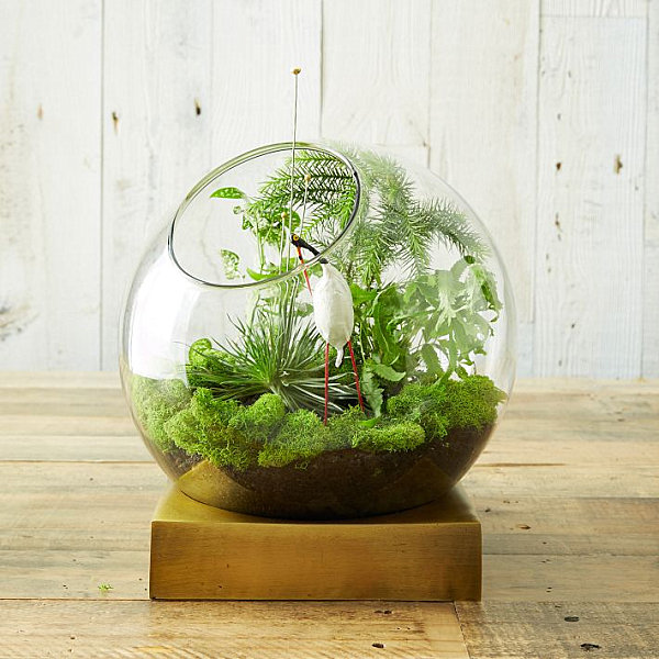 Terrarium with a brass base