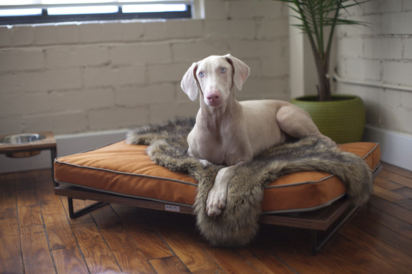 View in gallery Drayton Pet Bed Lounger by Architect Pets 01 grande. Modern Pet Furniture That Will Look Great In Your Home