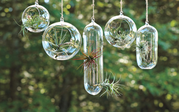 Air plant vessels