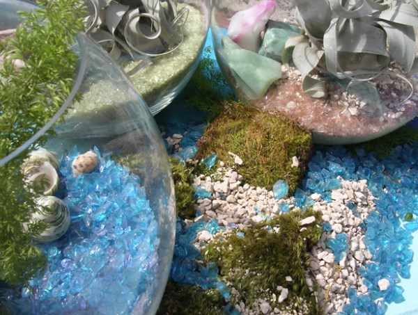 Air plants, glass and minerals