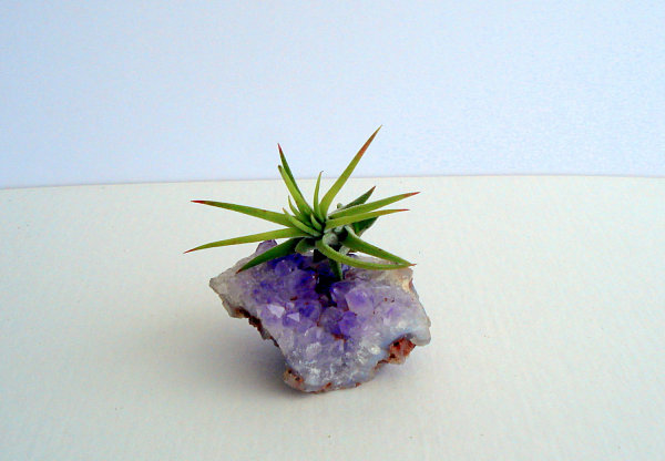 Amethyst crystal planter