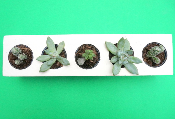 Arrange your succulents in the painted planter