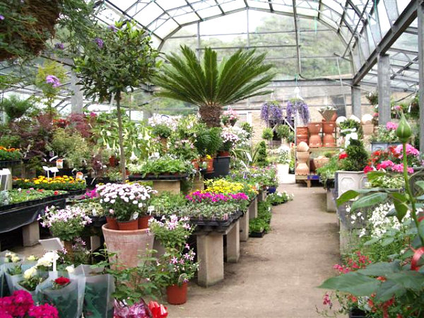 Assortment of plants in a nursery greenhouse