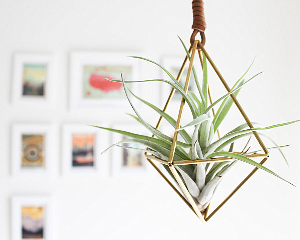 5 unique ways to display air plants for Geometric air plant holder
